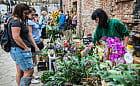 Zielone Podwórko ugościło wielbicieli roślin