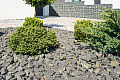 Ogrodowe aranżacje. Jak wykorzystać żwir i dekoracyjny kamień?