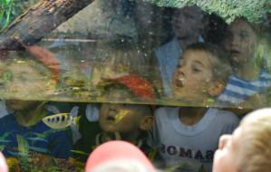 Morze atrakcji w Akwarium Gdyńskim