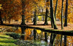W parku Oliwskim wyłowiono zwłoki
