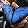 Zobacz egzotyczne motyle w Galerii Metropolia