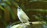 Zagrożone wyginięciem ptaki trafiły do gdańskiego zoo