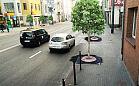 Szpaler drzew powstanie na al. Niepodległości w Sopocie