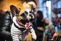 Futrzak Fest, czyli targi dla miłośników psów i kotów