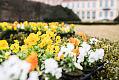 Tysiące kwiatów w parku Oliwskim