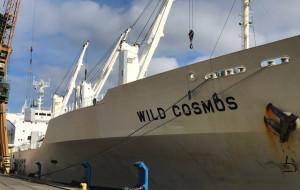 Rekordowy, mrożony ładunek  z Gdyni do Konga