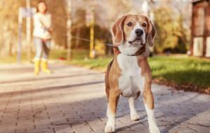 Trening z psem. Jak trenować z pupilem?