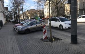 Sopot: rozpoczęły się nasadzenia drzew przy al. Niepodległości