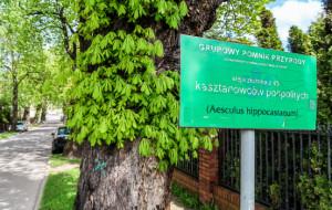 Znikną pomniki przyrody z ul. Kasztanowej