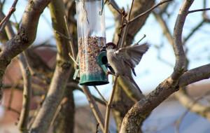 Ptaki w przydomowym ogrodzie. Jak je wabić?