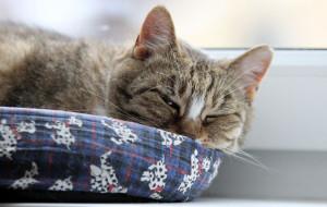 Adopcje zwierzaków: zwykła niezwykła Milka czeka na dom