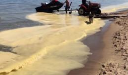 Żółta zawiesina na wodzie: spokojnie, to tylko pyłki