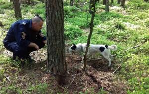 Pies przywiązany do drzewa w lesie na Wiczlinie