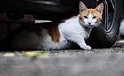 Kocie porady: czy kot powinien wychodzić na zewnątrz?