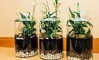 Odbierz darmowy kwiat antysmogowy i dołącz do walki o czyste powietrze