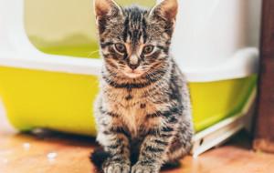 Kocie porady: gdy kot unika kuwety