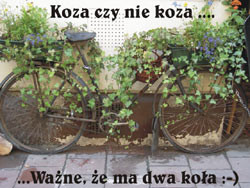 Sępólno Krajeńskie i okolice