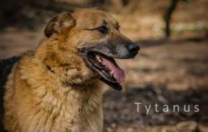 Wyjątkowy Tytanus: duży pies, któremu trudno znaleźć dom