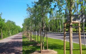 """Miasto Wspólne: """"Mieszkańcy Gdyni chcą więcej zieleni"""""""