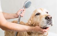 Jak często oraz czy w ogóle można kąpać psy i koty?