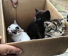 Policjanci uratowali porzucone małe kotki