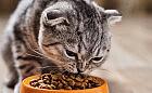 Kocie porady: karma sucha czy mokra?