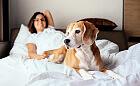 Spanie z psem lub kotem: pozwalać czy nie?
