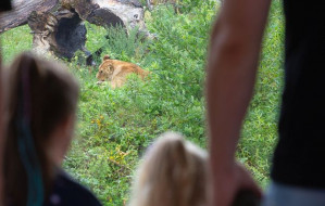 Odwiedzaj  zoo jak często chcesz i bez kolejek do kasy