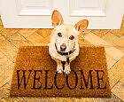 Jak oduczyć psa skakania przy powitaniu?