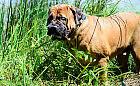 Dlaczego psy i koty jedzą trawę?