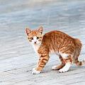 Jak odnaleźć zaginionego kota? Lista sprawdzonych porad