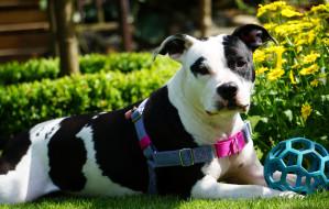 Magia adopcji: szczęśliwe historie psów ze schroniska