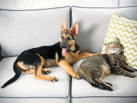 Sofa odporna na zwierzaki. Jaką wybrać?