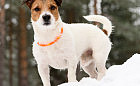 Pies widoczny po zmroku - akcesoria na jesień i zimę