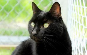 Hades - kot, który wciąż ma nadzieję na adopcję