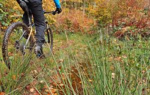 Leśne trasy rowerowe: od Gdańska Osowy do Gdyni Źródła Marii
