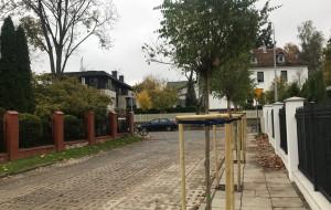 """""""Nielegalne"""" drzewa na chodniku w Orłowie"""