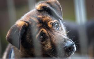 Almondo: niewidomy pies, który wypatruje opiekuna