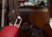 Pięć hoteli za miastem, do których zabierzesz psa