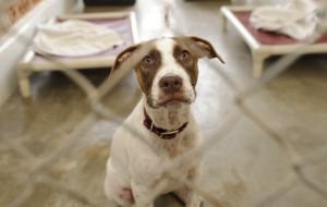 Zamieszanie i szczęśliwe zakończenie adopcji psa ze schroniska