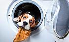 Odkurzacze i pralki stworzone do walki z sierścią