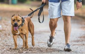 Wyższe kary za puszczanie psa bez smyczy