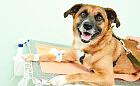 W Trójmieście powstał bank krwi dla zwierząt
