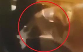 Podduszany pies na filmie młodej dziewczyny