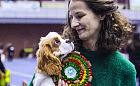 Karnawałowa wystawa psów rasowych