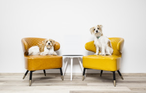Jak wybrać odpowiedni hotel dla psa?