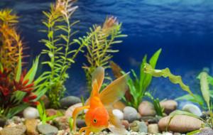 Zakładamy pierwsze akwarium