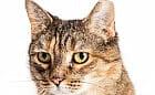 Co oznacza obcięte ucho u bezdomnego kota?