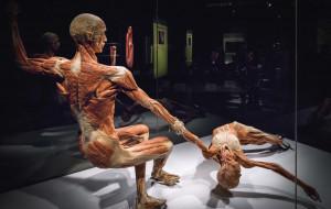 Wystawa Body Worlds w Gdańsku