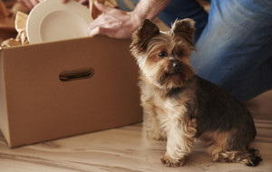 Jak przygotować psa na przeprowadzkę?